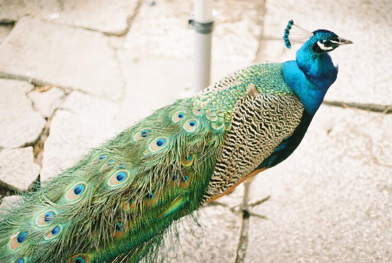 seville-spain-travel-photography-fine-art-19.jpg