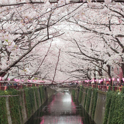 japan-spring-essentials-jpt.jpg