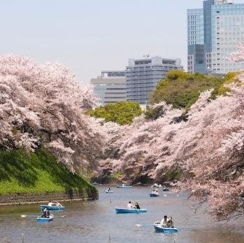 tokyo-blossom-jpt.jpg