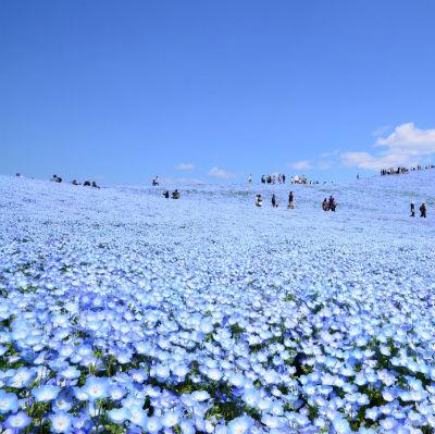 paradise-in-ibaraki-jpt.jpg