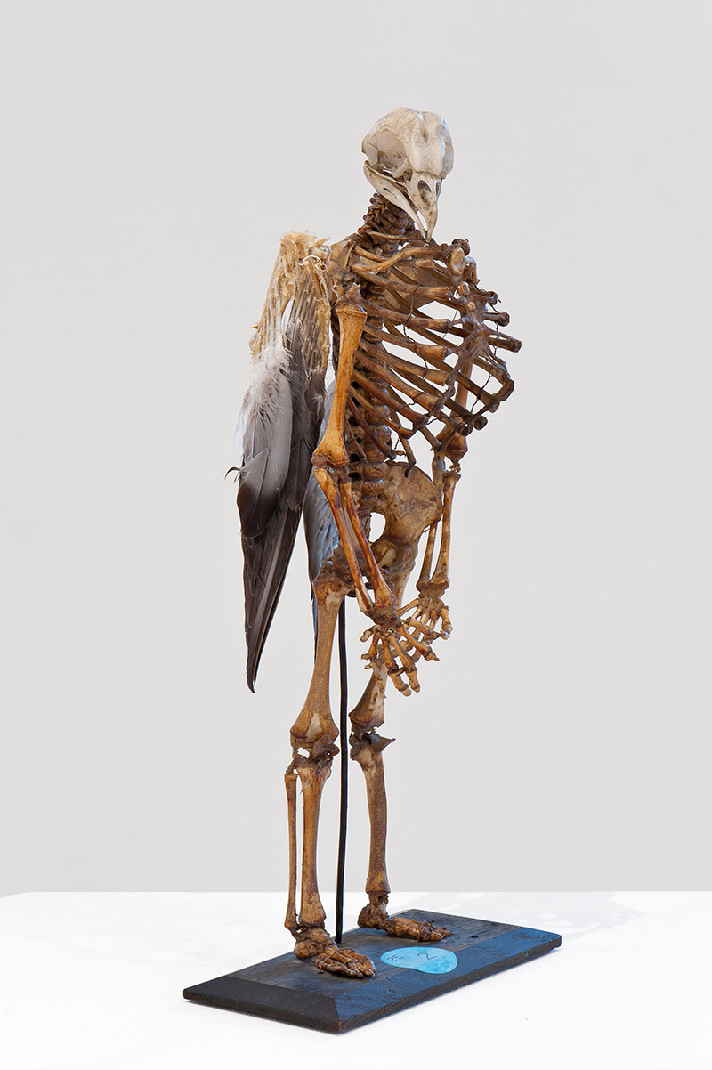 Du, 2010, Human bones, bird skull and feathers 36,5 cm