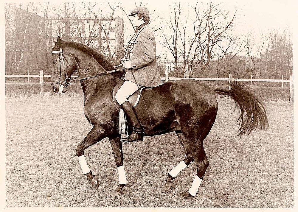 Hanovarian gelding by Valentino in piaffe under Gerhard