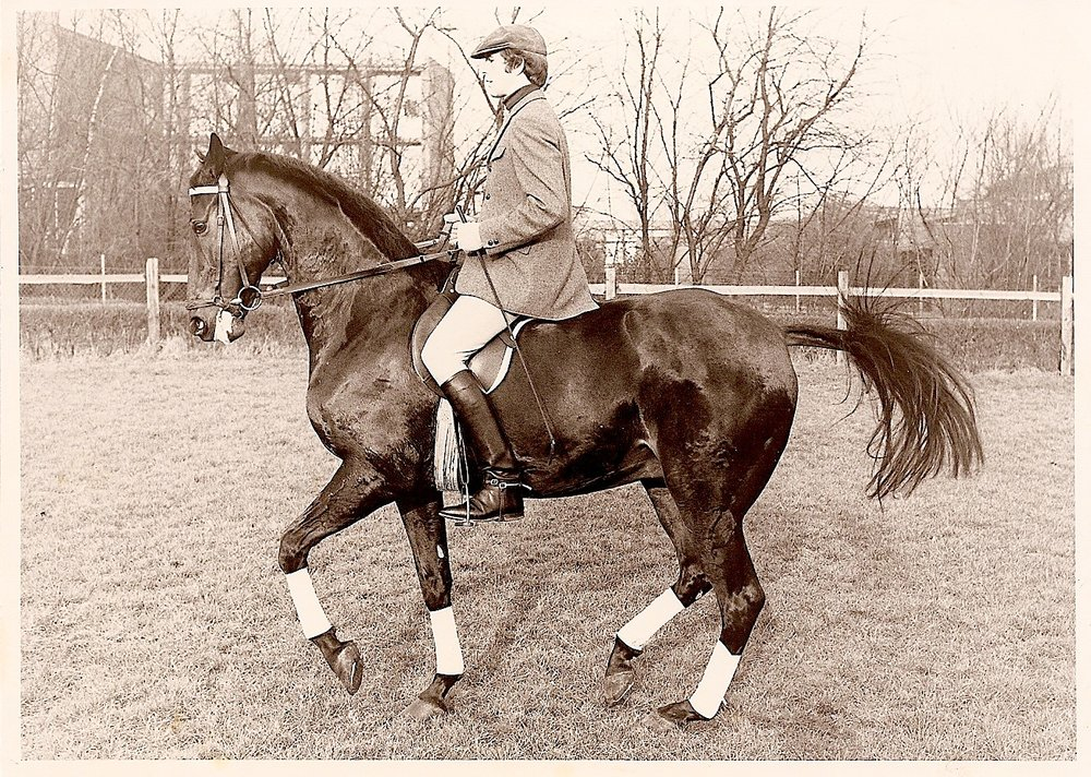 Politz on Hanoverian gelding