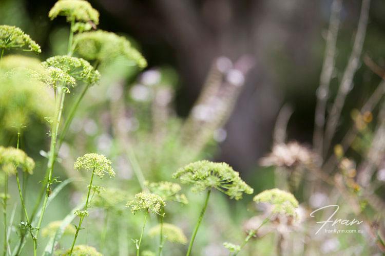 gwinaganna-lifestyle-retreat-plants.jpg