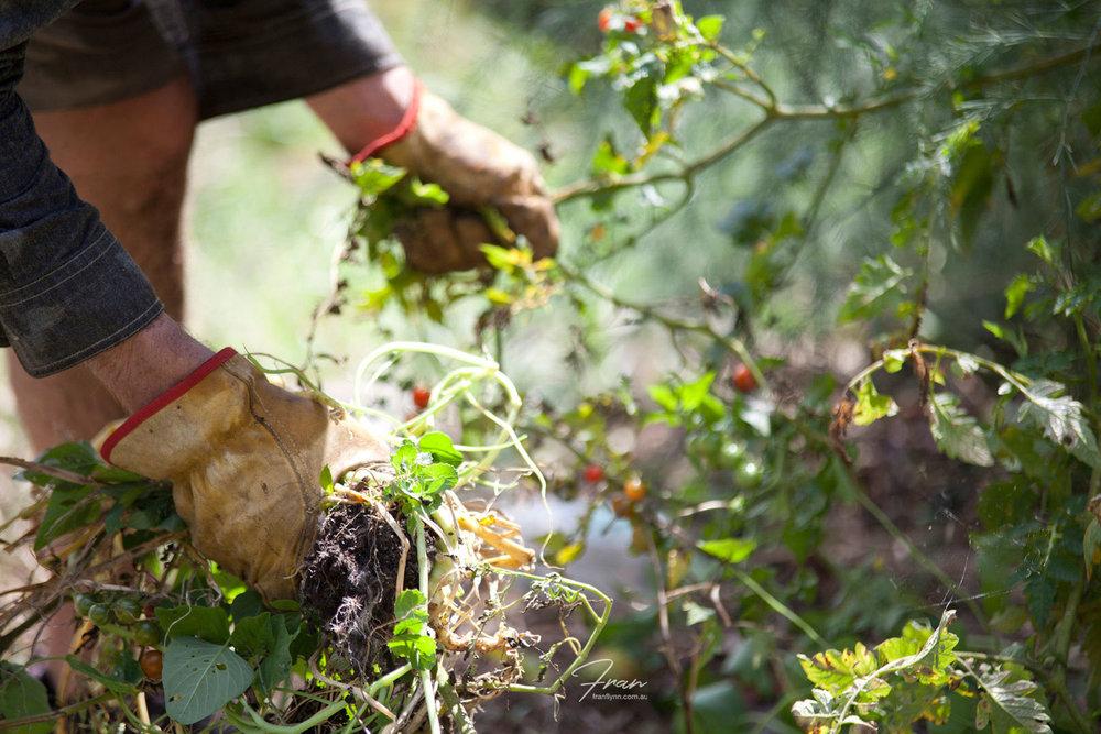 gwinaganna-lifestyle-retreat-farming.jpg