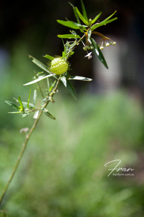 gwinaganna-lifestyle-herbs.jpg