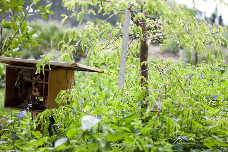 gwinaganna-lifestyle-retreat-birdhouse.jpg
