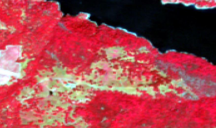 Biomass4.jpg