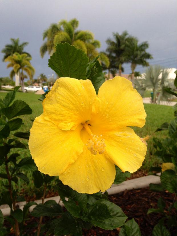 ss-flower.jpg