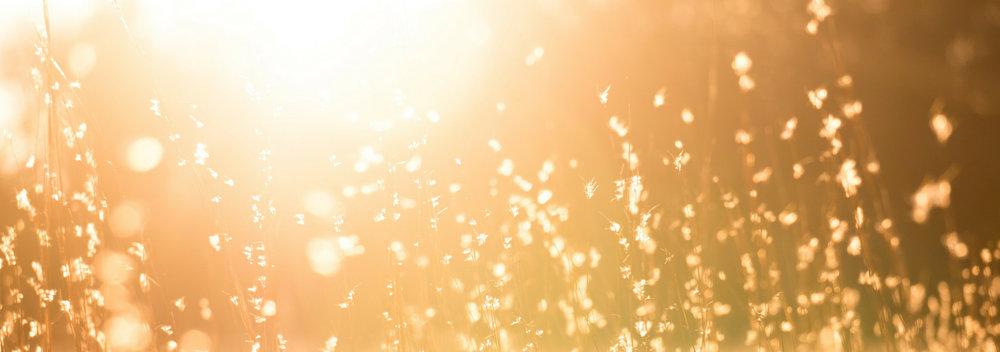 banner-standards-to-love-summertime-10.jpg