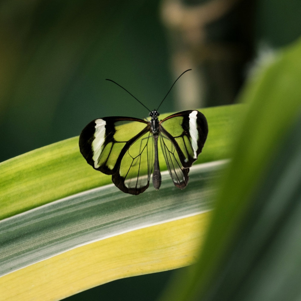 banner-butterfly-nets-and-world-wanderers-04.jpg