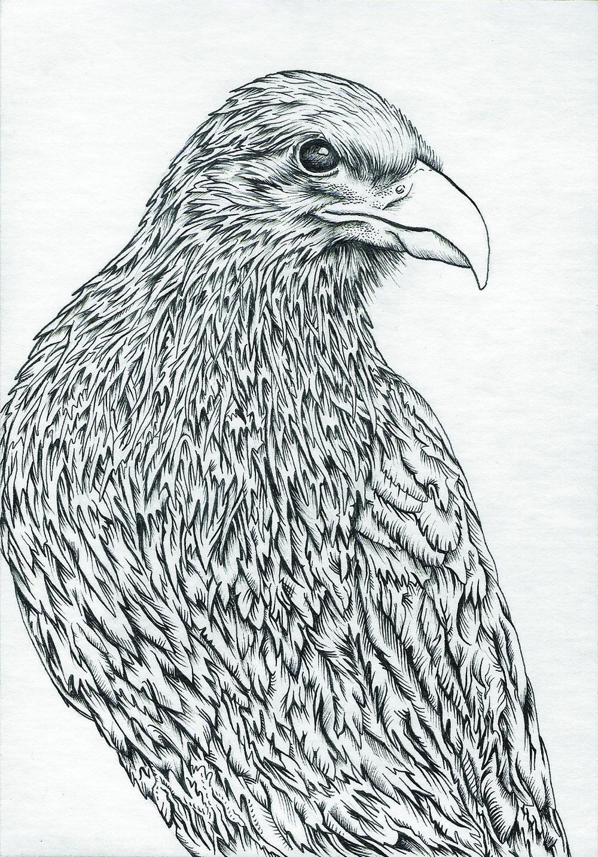 Crow.jpg