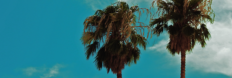 palm_trees.png