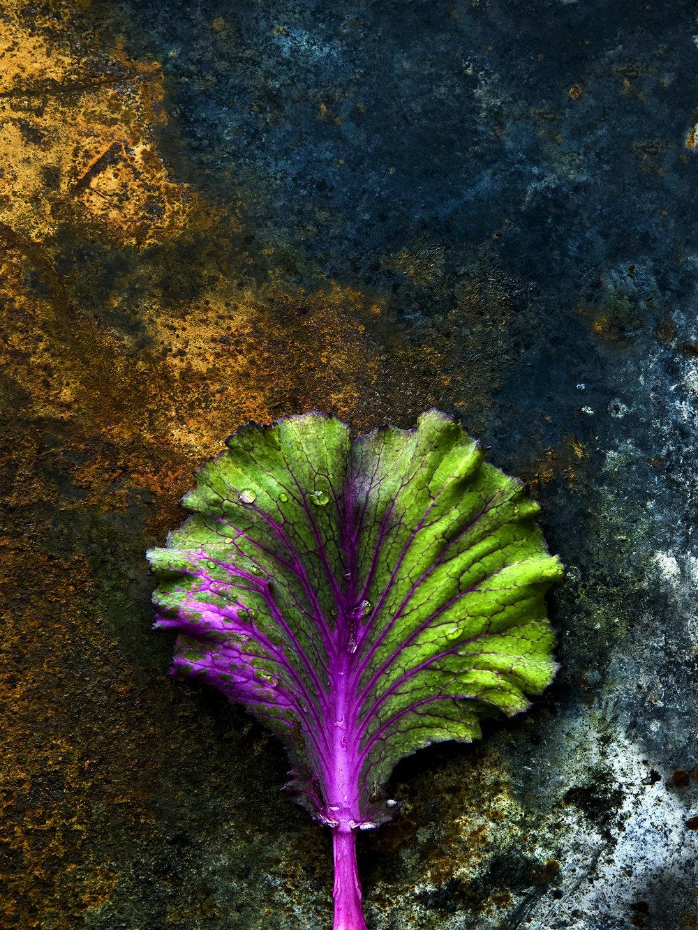 cabbage 2 A4.jpg