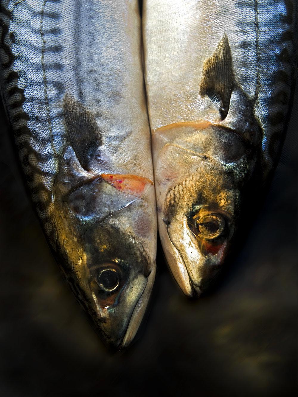 fish heads.jpg
