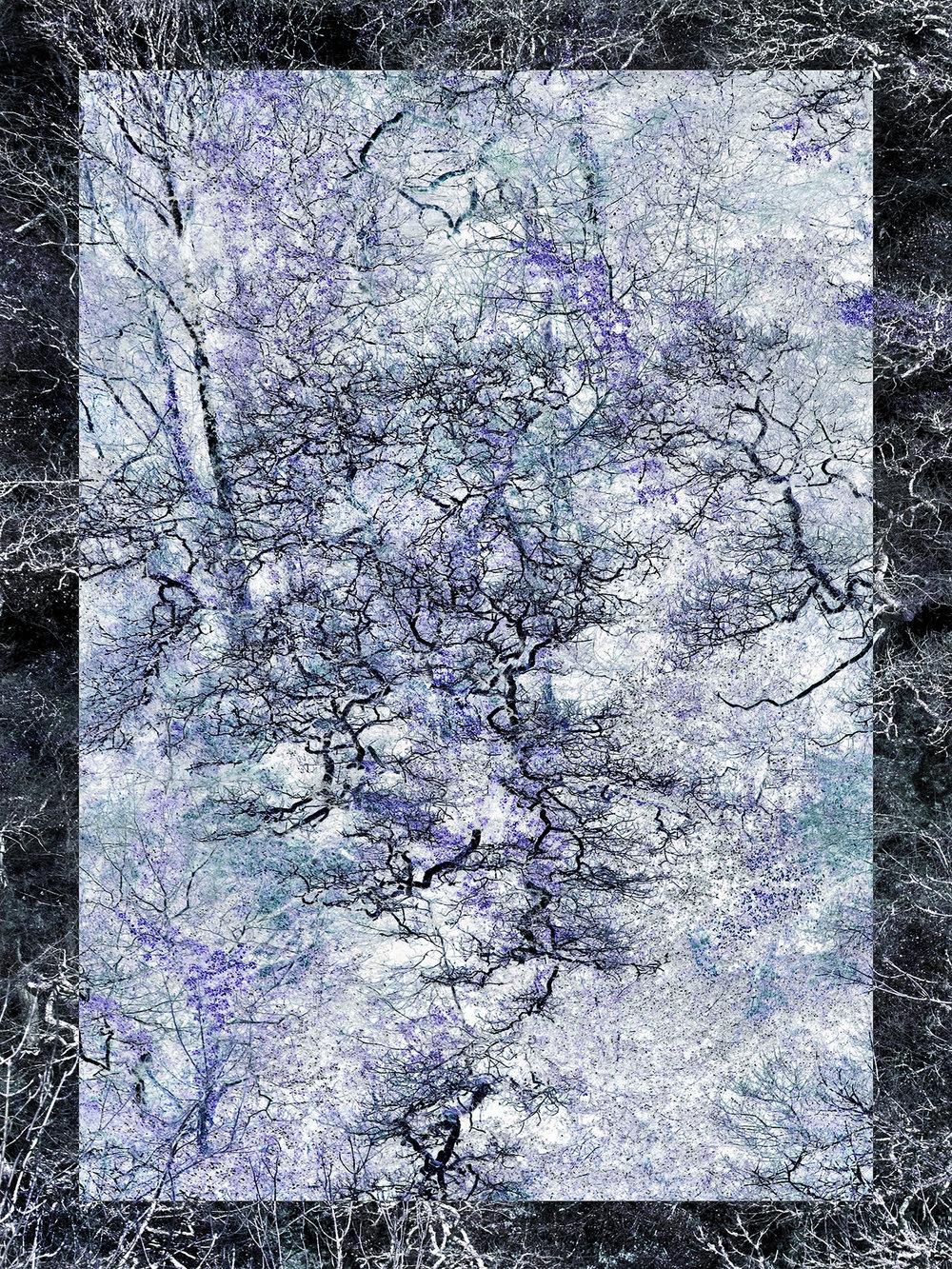 AF Blue Trees.P.Mihalka.jpg