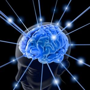 Image - brain2