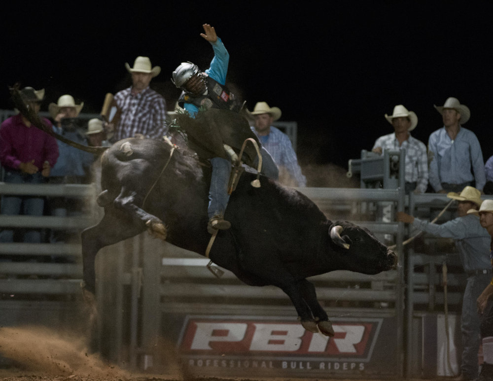 Seven Dust who was one of 3 bulls that bucked at 2016 KPI PBR who were all in the running for 2016 Bucking Bull of the year!.jpg