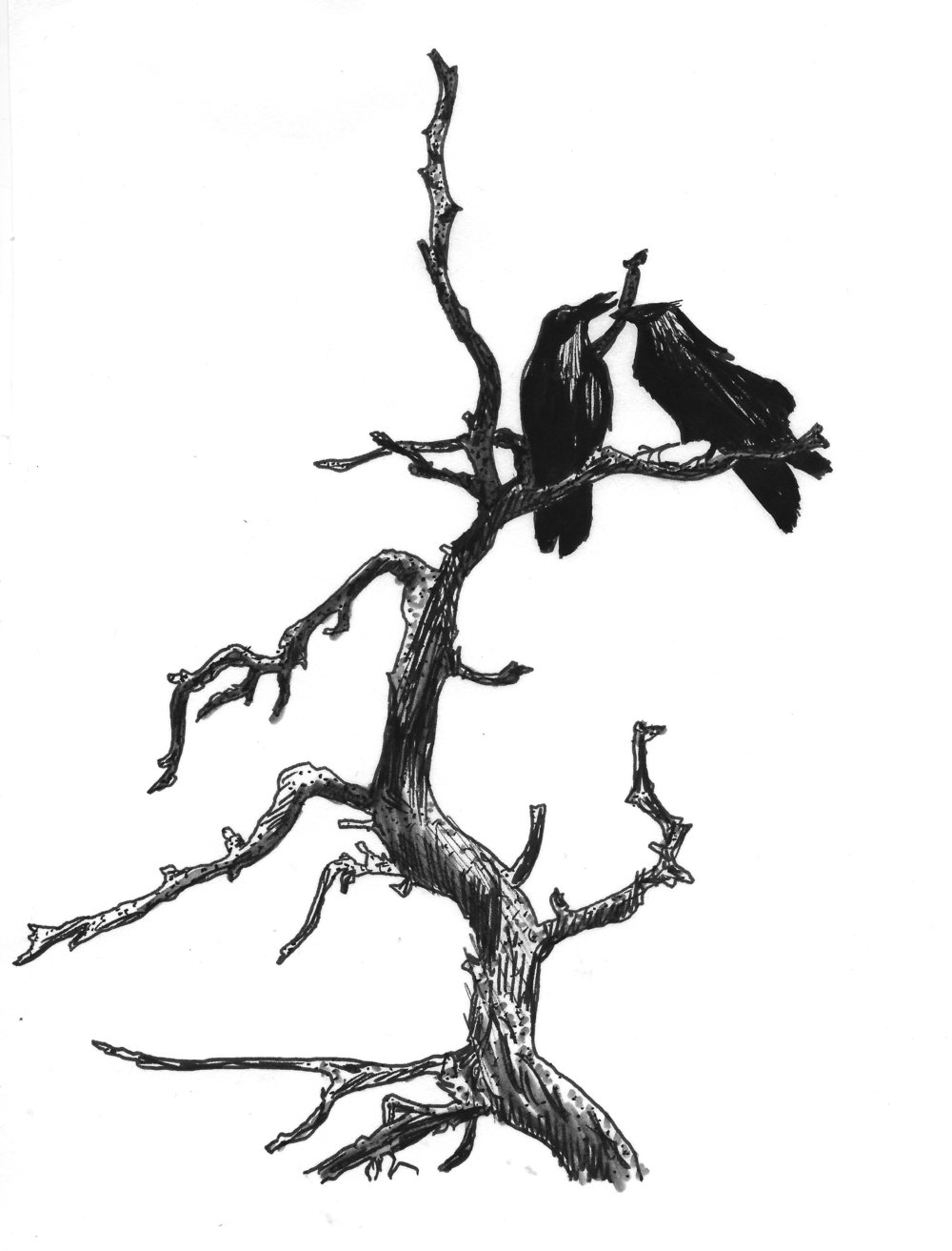 Crooked Crow.jpg