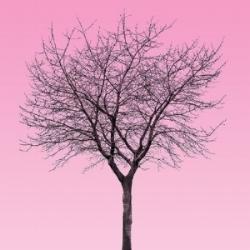tree5 copy square.jpg
