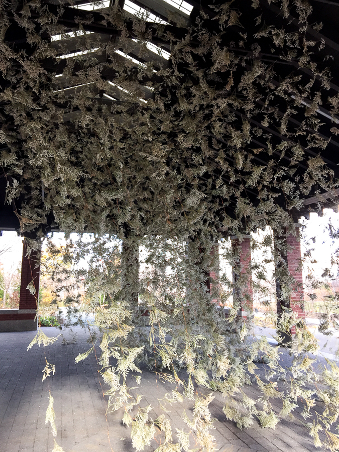 photo credit: Rebecca Louise Law