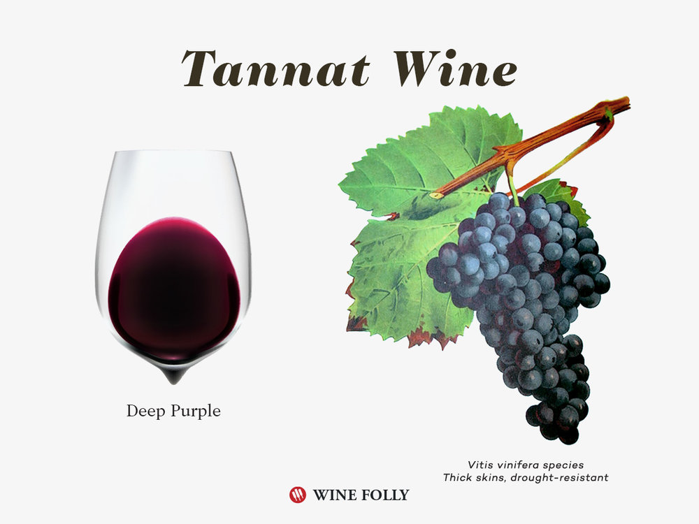 Tannat-wine-color-grapes-illustration-winefolly.jpg