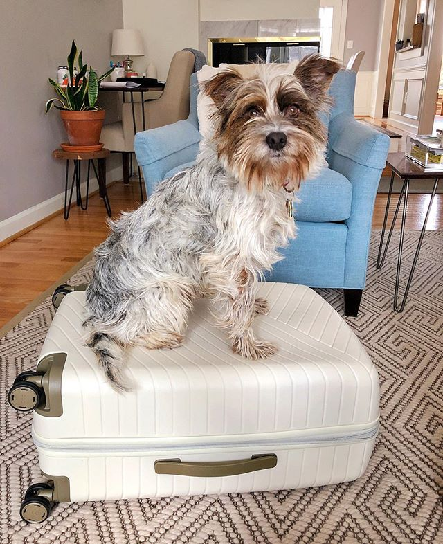 What brightens a Monday better than a GIVEAWAY?! Nothing if you ask me! || Buzz is so excited to offer one of you the chance to win an @oootraveling suitcase of your own!! These suitcases are awesome and super trendy!! Buzz is already scheming where we will travel next!! To qualify just complete all 3 steps:  1. Follow @thehealthmason & @oootraveling  2. Tag your 3 travel besties in the comment! The more tags, the higher your chances of winning!! 3. Sign up for the OOO Traveling newsletter via the link in the @oootraveling bio or on www.oootraveling.com  Winner will win a Medium suitcase in Vanilla (same as mine pictured here!). Winner must have a ship to address in the 48 Continental US.  That's it! Good luck! Giveaway closes SATURDAY 3/16 at 11:59PM EST. *This giveaway is not associated with or sponsored by @Instagram.  #giveaway #travel #suitcasetravels #rescuedogsofinstagram #rescueismyfavoritebreed