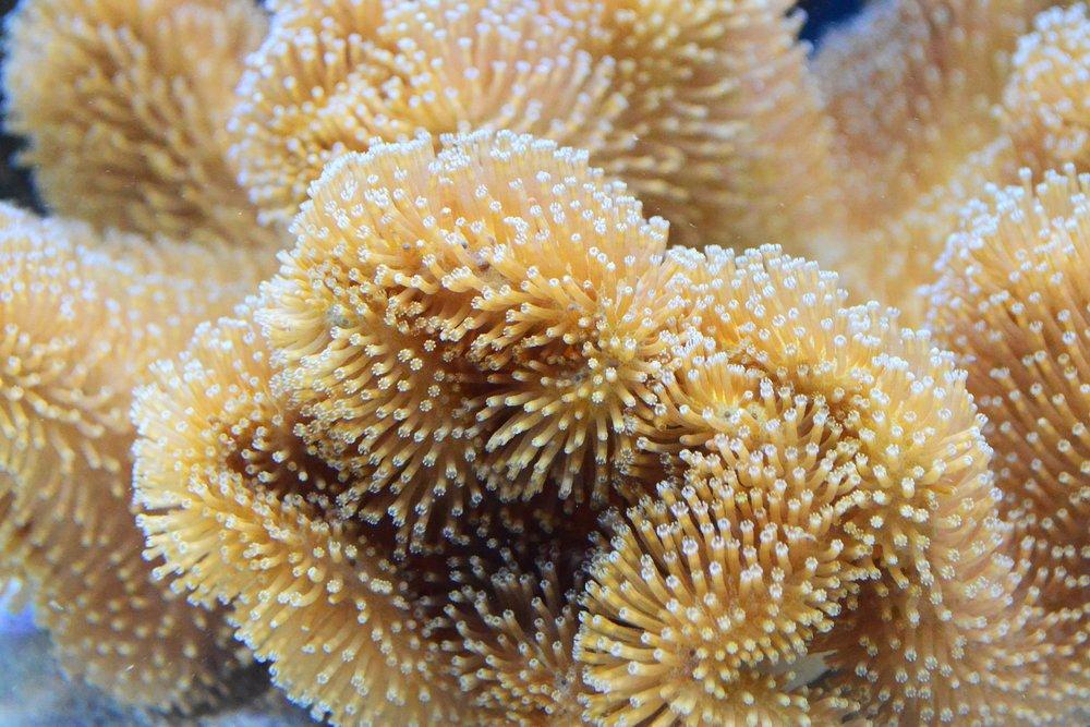 coral-closeup.jpg