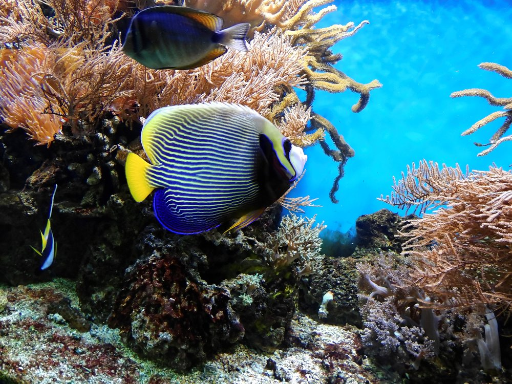 coral-fish-underwater-bruno.jpg