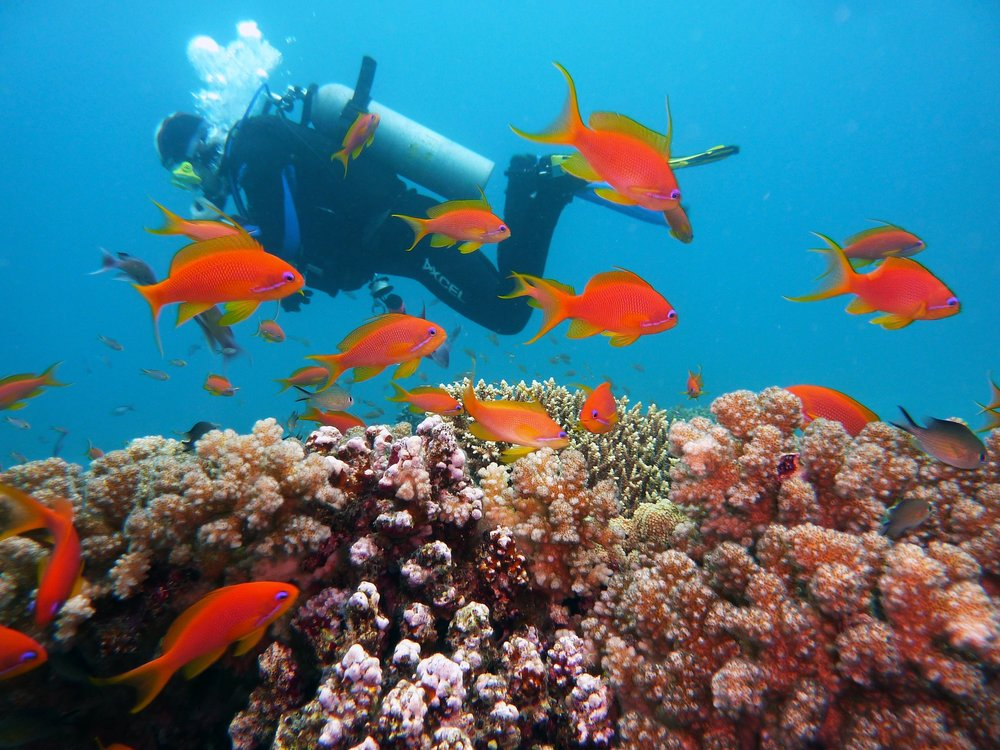 diving-scuba-reef-fish-joacant.jpg