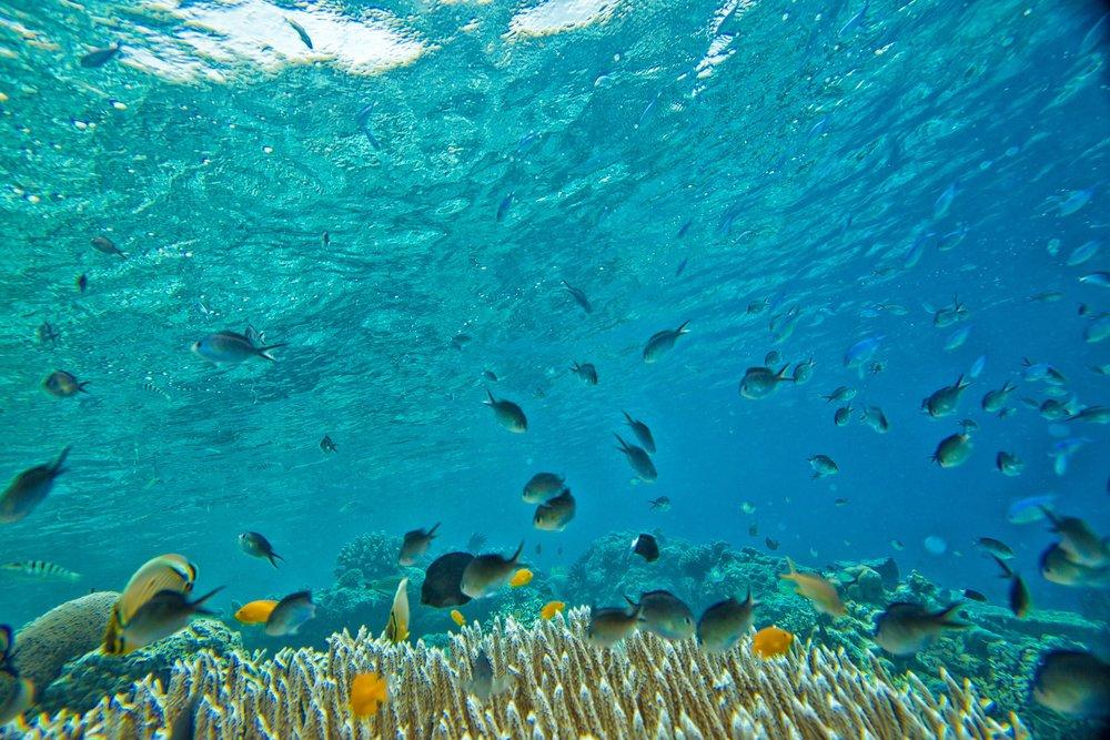 underwater-kanenori-fish-coral.jpg