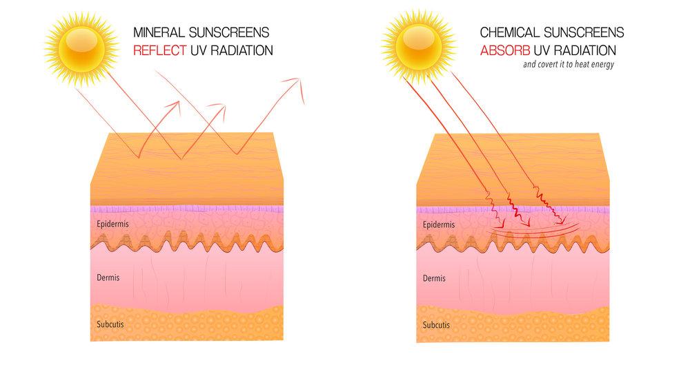 mineral-vs-chemical-sunscreens-skin-diagram-reflect-absorb-uv-radiation-harken-derm.jpeg