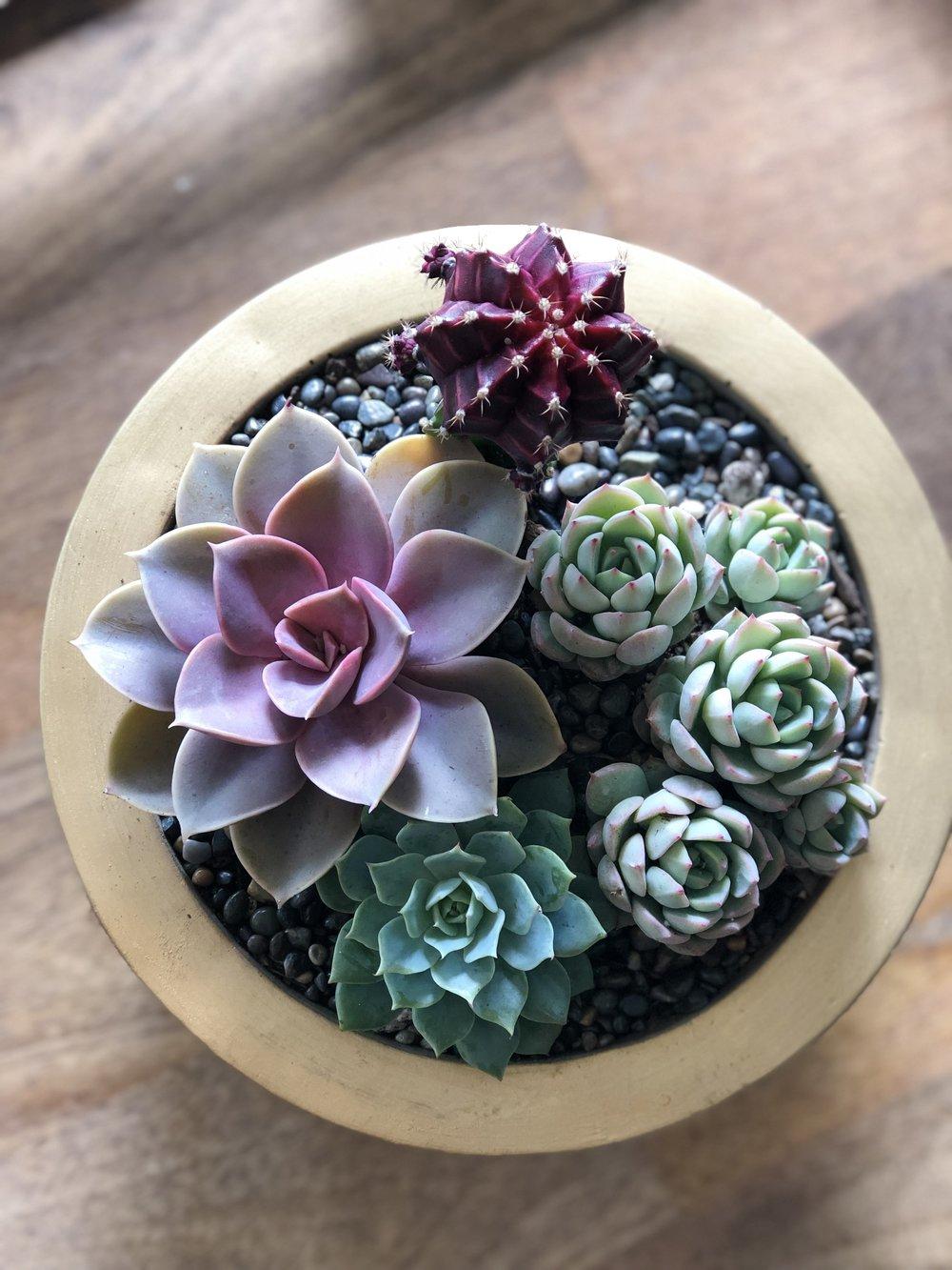 PLANTS & SUCCULENTS -