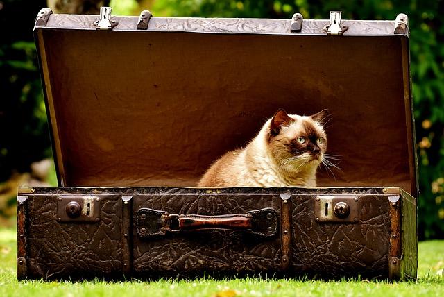 luggage-2442126_640.jpg
