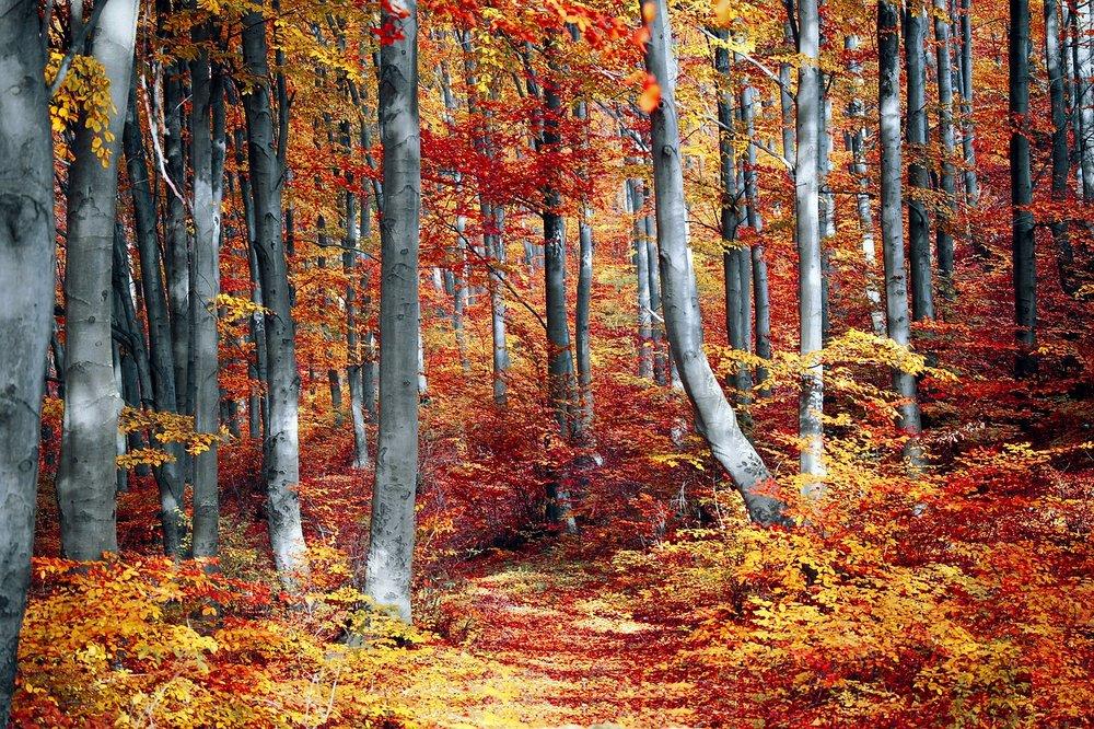 fall-3089995_1280.jpg