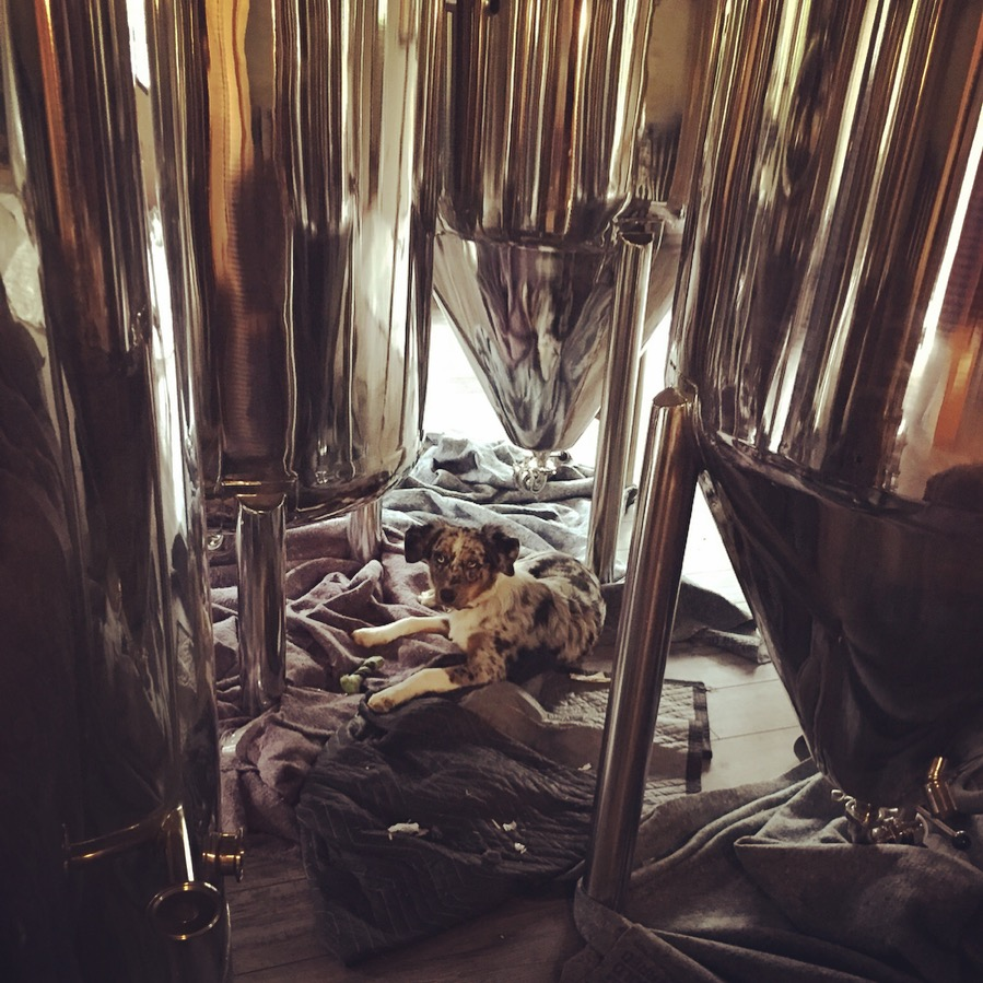 Frankie relaxing under the brewhouse