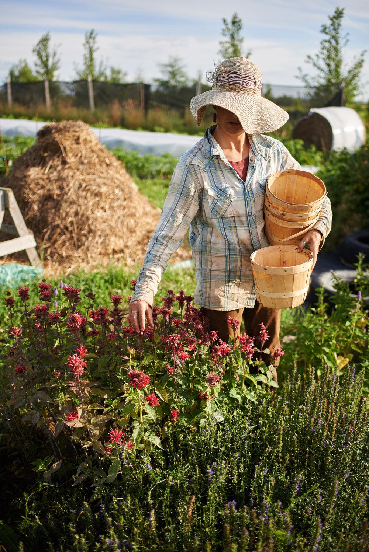 Paniers bio-Fleurs comestibles- Clotilde.jpg