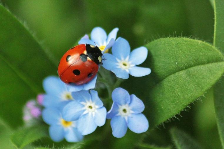 ladybug_edited-1.jpg