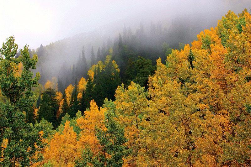 Fall color, Lincoln National Forest, Ruidoso, NM. Photo by Rankin Harvey.