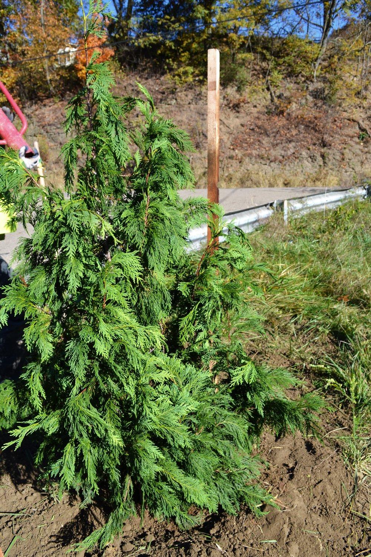 2016-11-05 Tree Planting Day (32).JPG