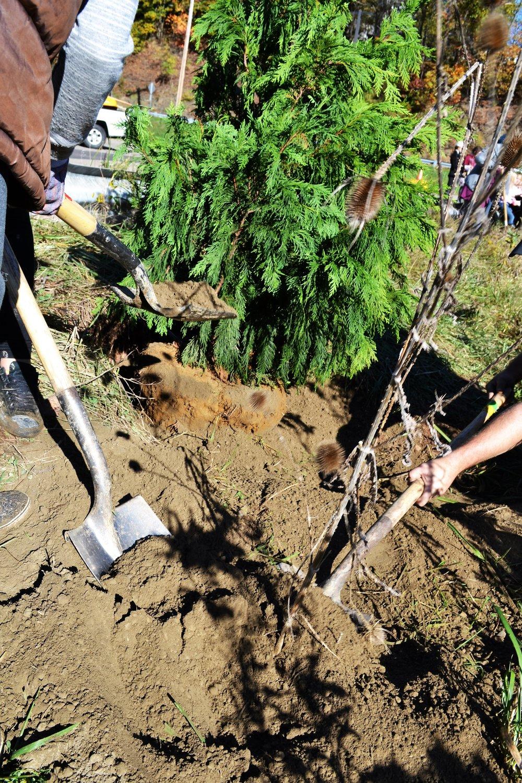 2016-11-05 Tree Planting Day (40).JPG