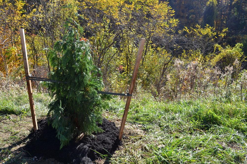2016-11-05 Tree Planting Day (66).JPG
