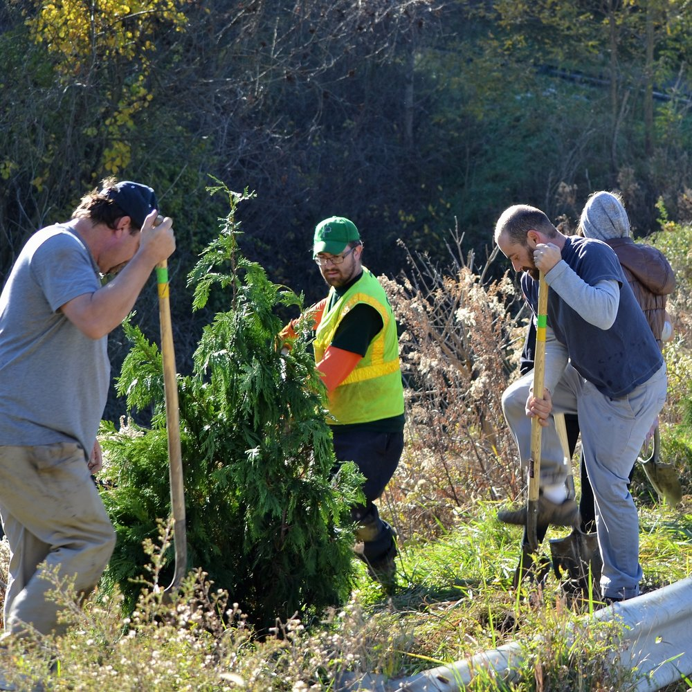 2016-11-05 Tree Planting Day (75).JPG