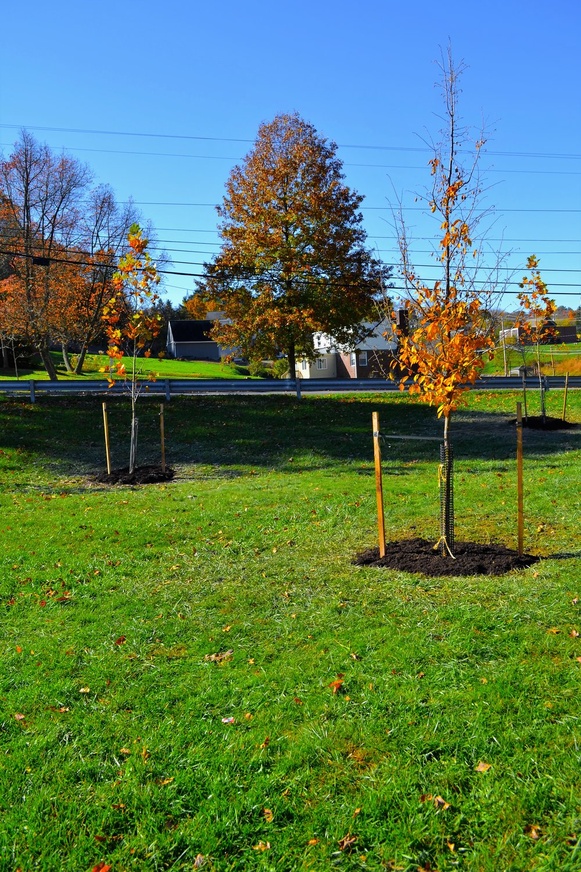 2016-11-05 Tree Planting Day (100).JPG
