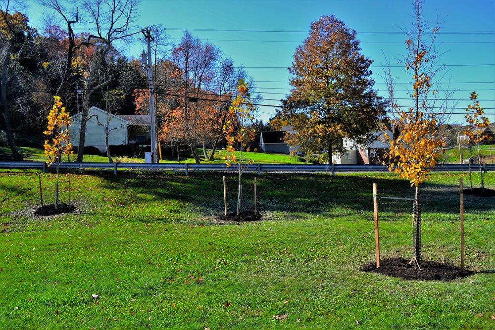 2016-11-05 Tree Planting Day (101).JPG