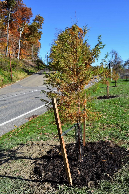 2016-11-05 Tree Planting Day (116).JPG