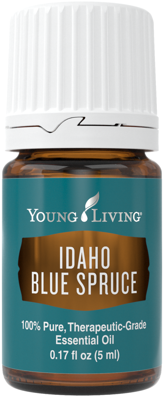 Idaho Blue Spruce.png