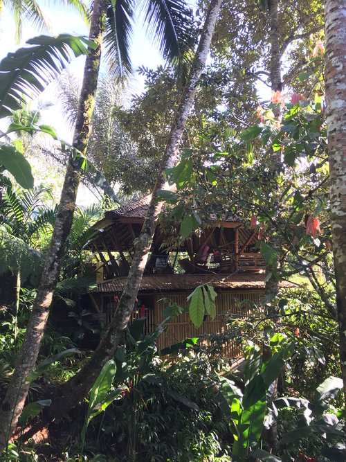 New+Bamboo+Treehouse+under+construction.jpg