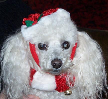 puppy dog christmas.jpg
