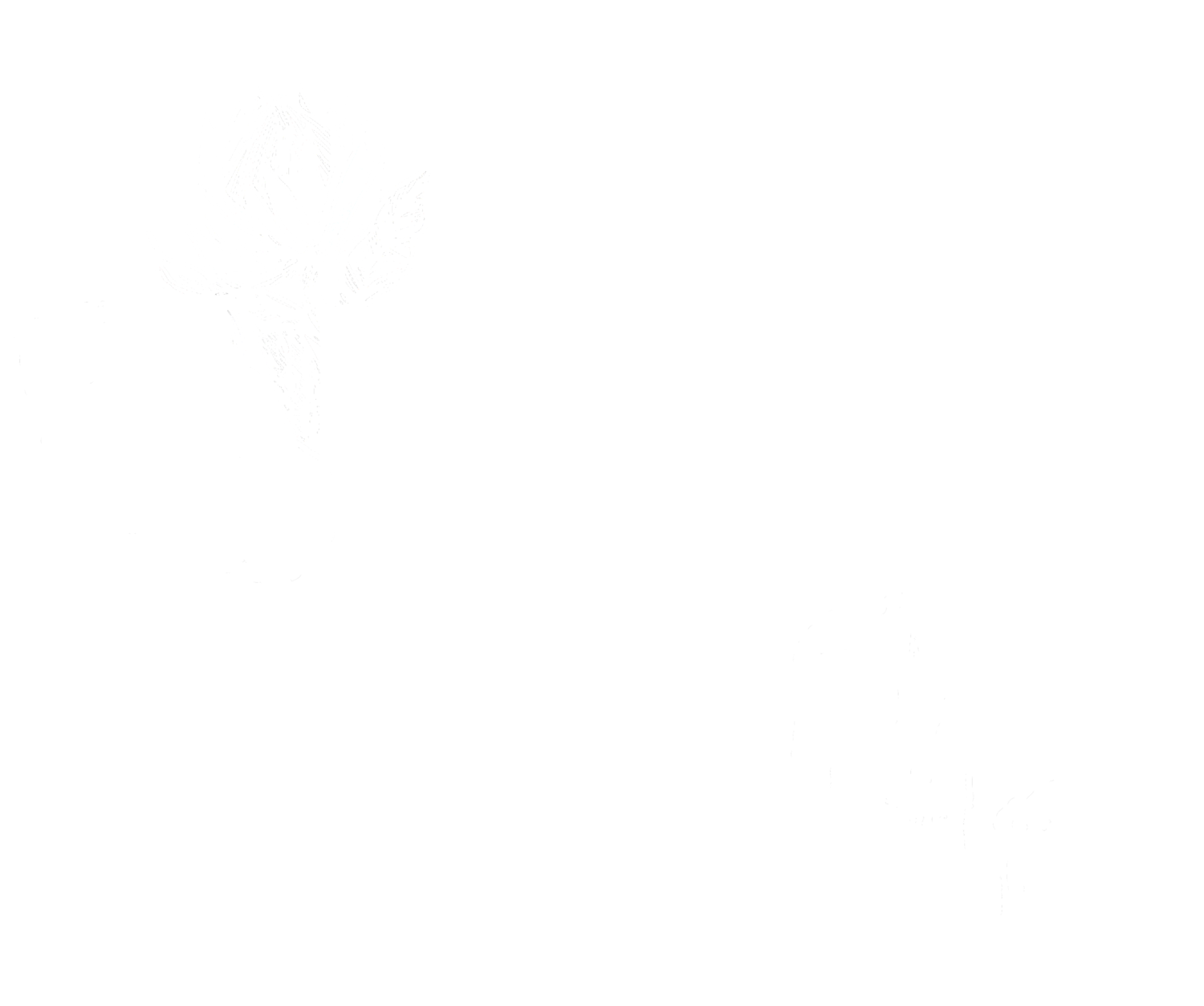 Taylor Kaderly Photography